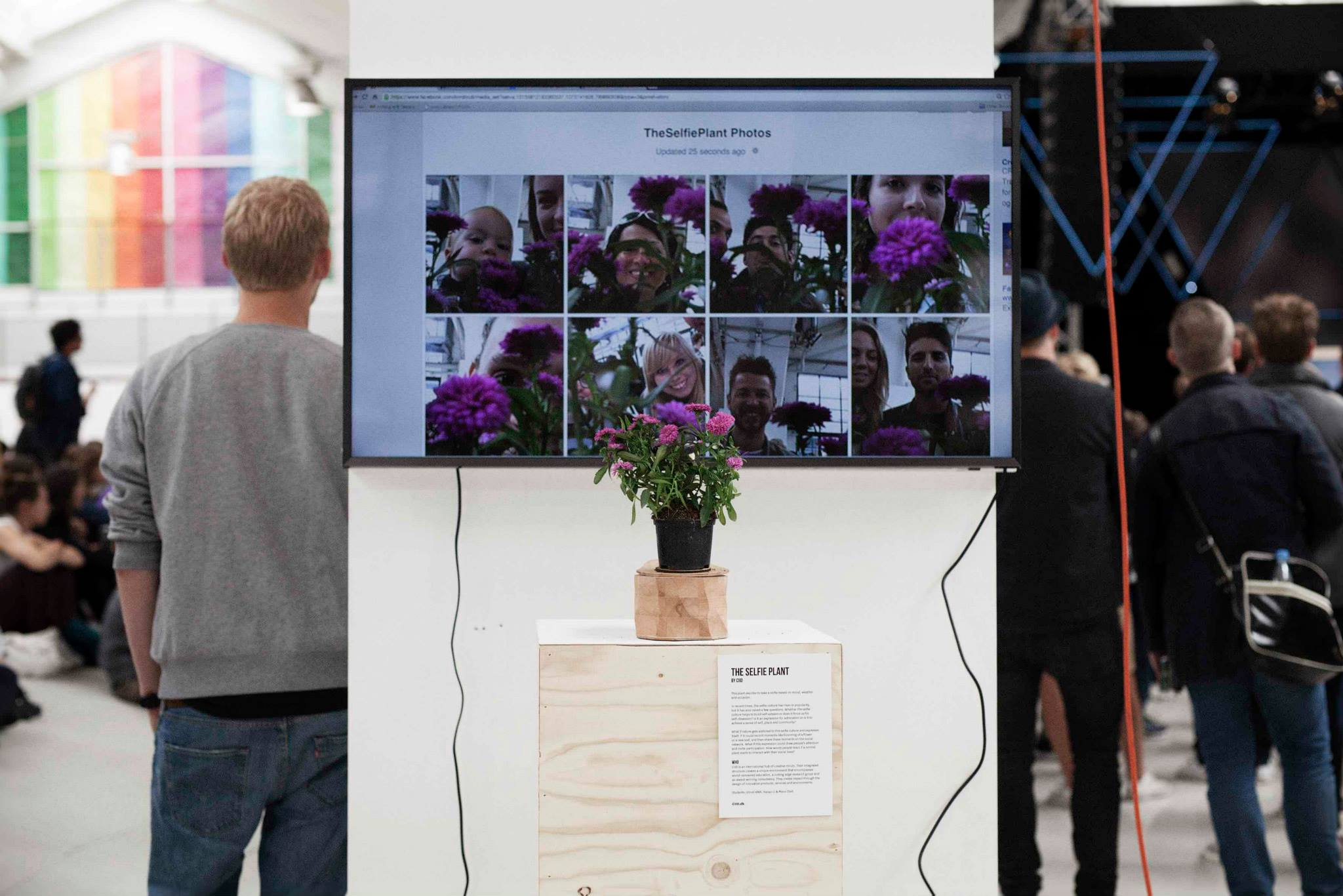 Selfie Plant at Trailer Park Festival