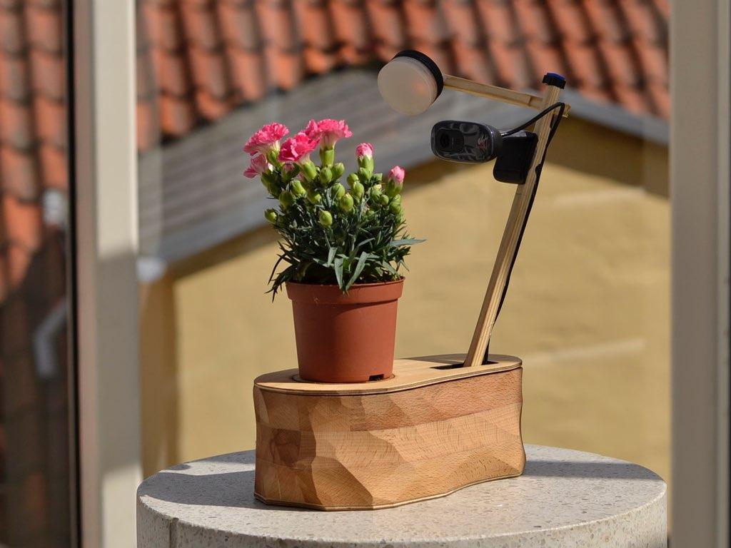 The Selfie Plant
